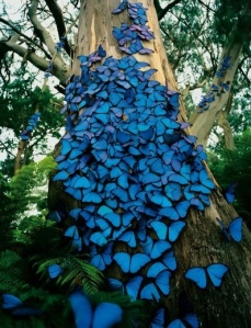 blue butterfly swarm
